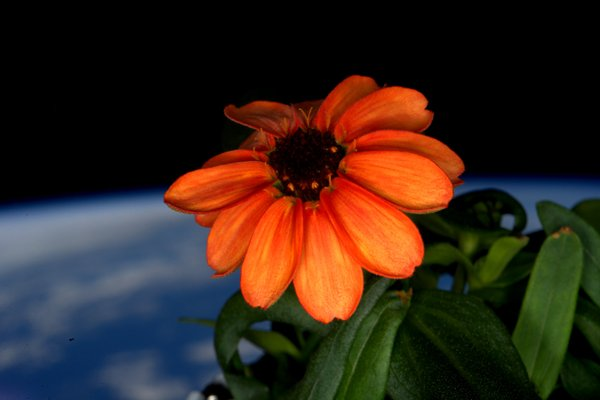 spaceflower